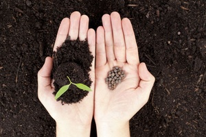 Open hands with newly sprout plant and seeds